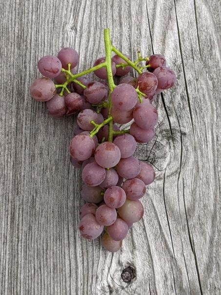 seedless-sweet-grapes